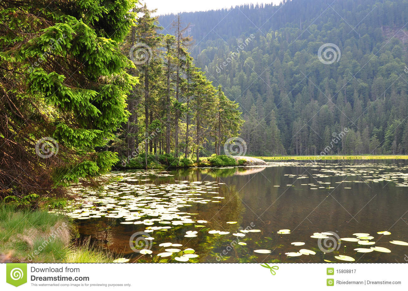 Lake Arber In Bavaria (Grosser Arbersee) Royalty Free Stock.