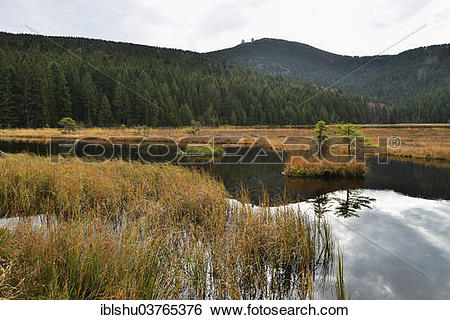 "Stock Images of ""Autumn in the Naturschutzgebiet Kleiner Arbersee."