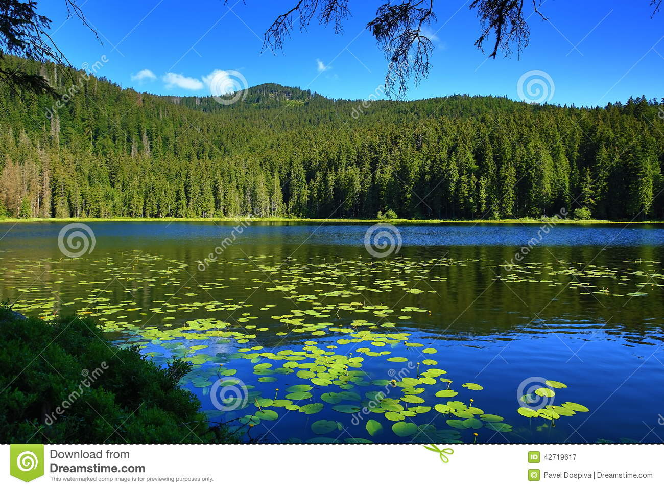 Grosser Arbersee, Bavarian Bohemian Forest, Germany Stock Photo.