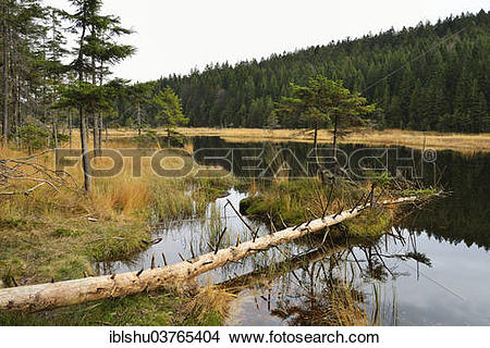 "Stock Photo of ""Dead tree, autumn in the Naturschutzgebiet Kleiner."