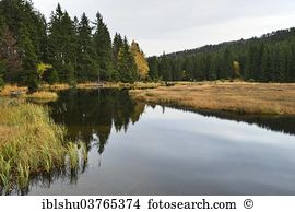 Kleiner arbersee nature reserve Images and Stock Photos. 30.