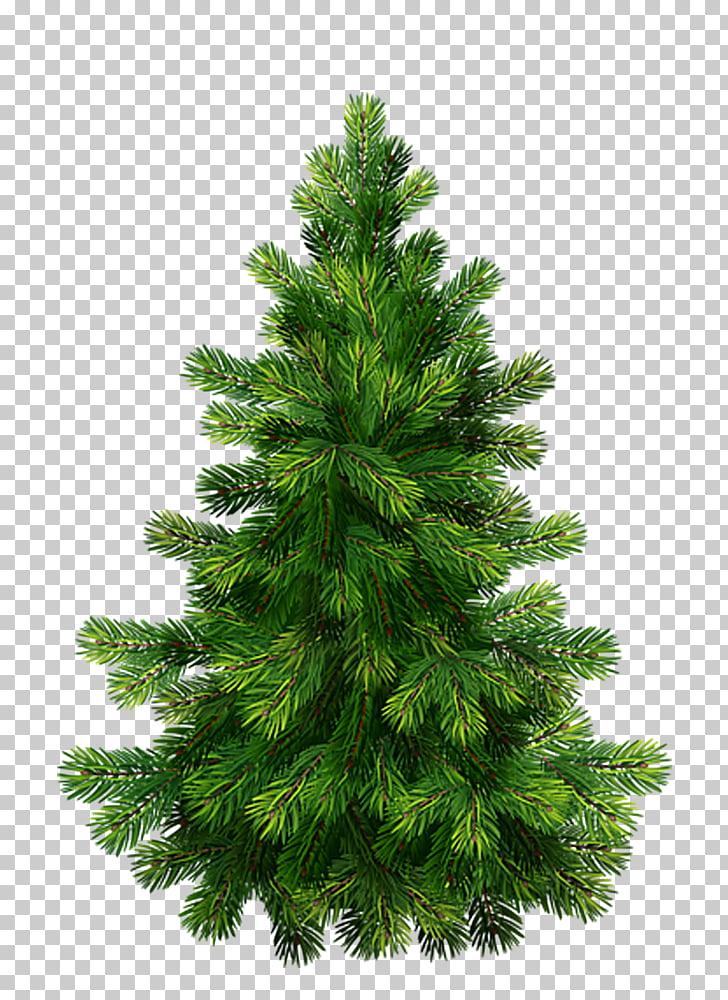 Pino navidad gráficos árbol de navidad, árbol PNG Clipart.