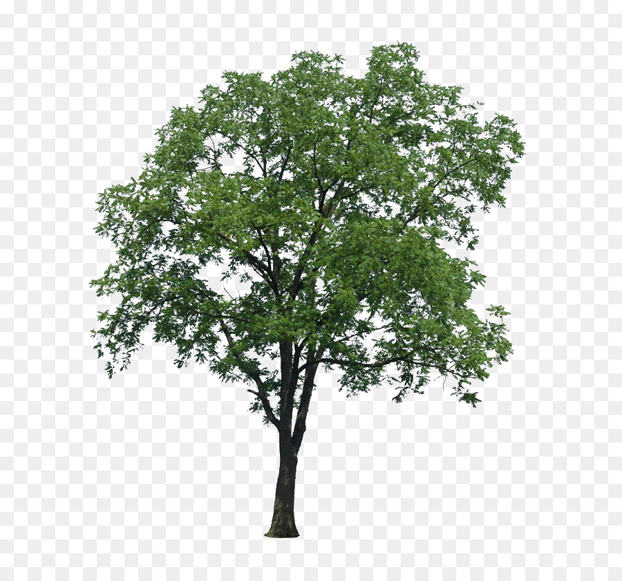 Arbol Png (99+ images in Collection) Page 2.