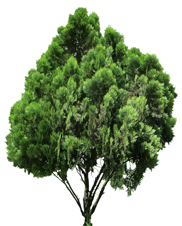 Arbol Png Photoshop Vector, Clipart, PSD.