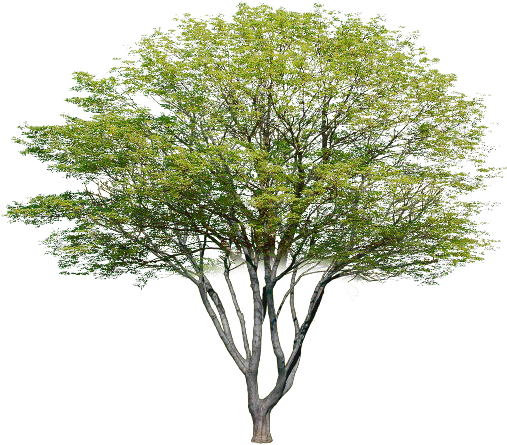 HD Garden Drawing, Plant Drawing, Tree Plan Png, Tree.
