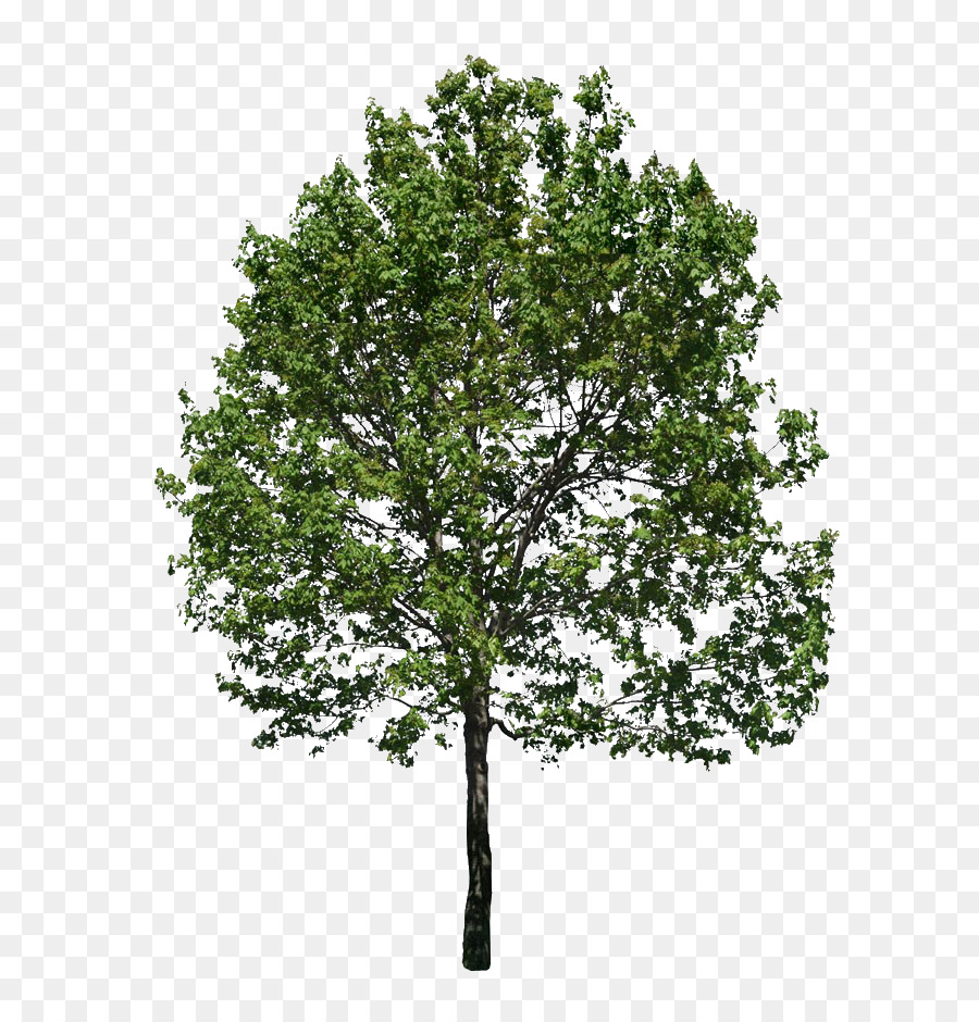 Arbol Png (99+ images in Collection) Page 3.