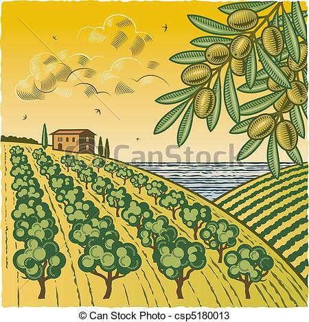 Vectores de aceituna, arboleda, paisaje.
