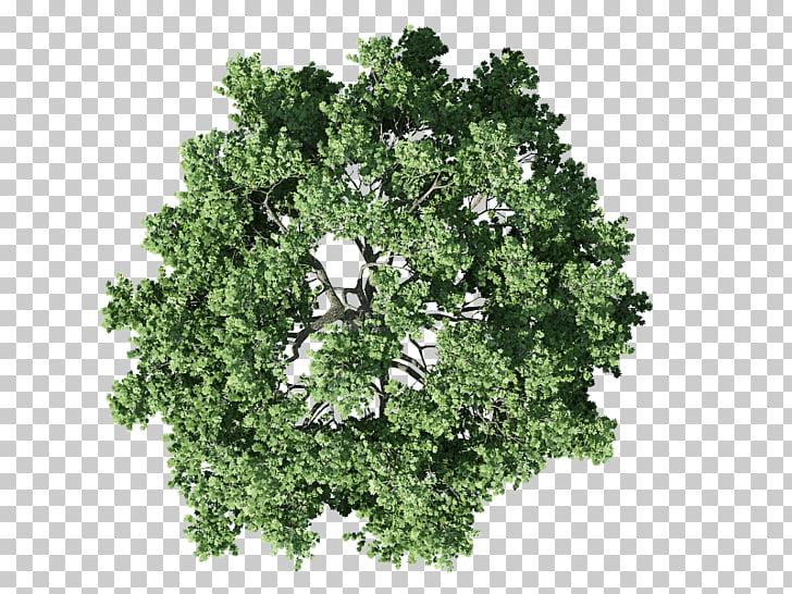 árbol arbusto plan, plan, alto ángulo de árbol verde PNG Clipart.