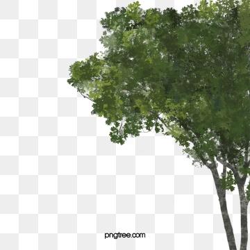 Arboles En Planta Imágenes PNG.