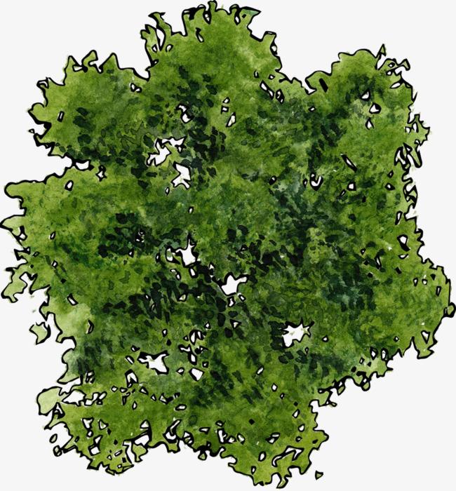 Una Vista Superior De Un árbol Verde, Vista Superior, Verde, Planta.