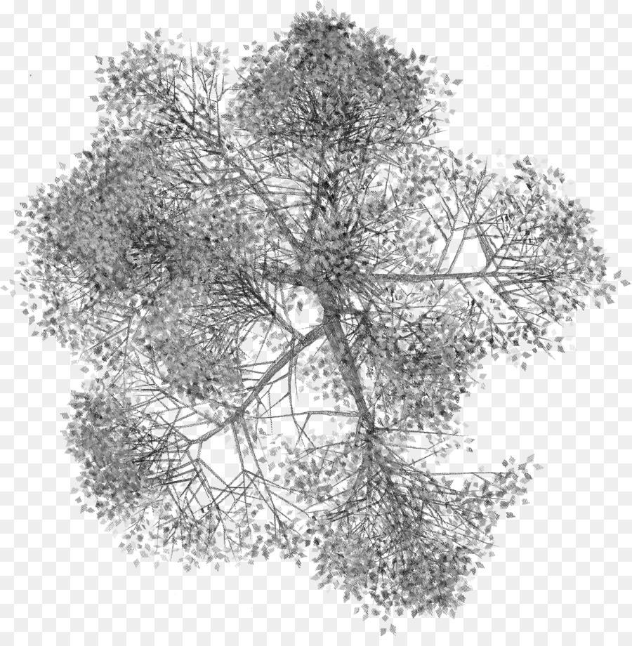 árbol, Planta, Planta Leñosa imagen png.