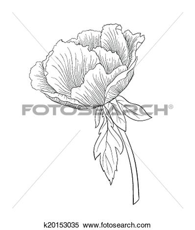 Clipart of beautiful monochrome black and white Plant Paeonia.