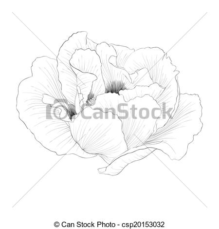 Vectors of beautiful monochrome black and white Plant Paeonia.