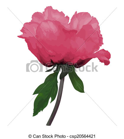 Paeonia Vector Clipart EPS Images. 123 Paeonia clip art vector.