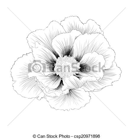 EPS Vectors of beautiful monochrome black and white Plant Paeonia.