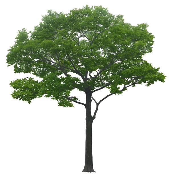 arbre,png.