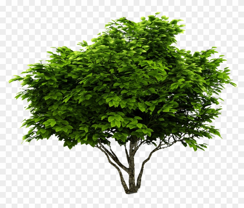 Cutout Plant Shrub Arbre Png, Landscape Elements, Tree.