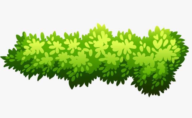 Green Bush, Bush Clipart, Shrub, Plant PNG Transparent Image and.