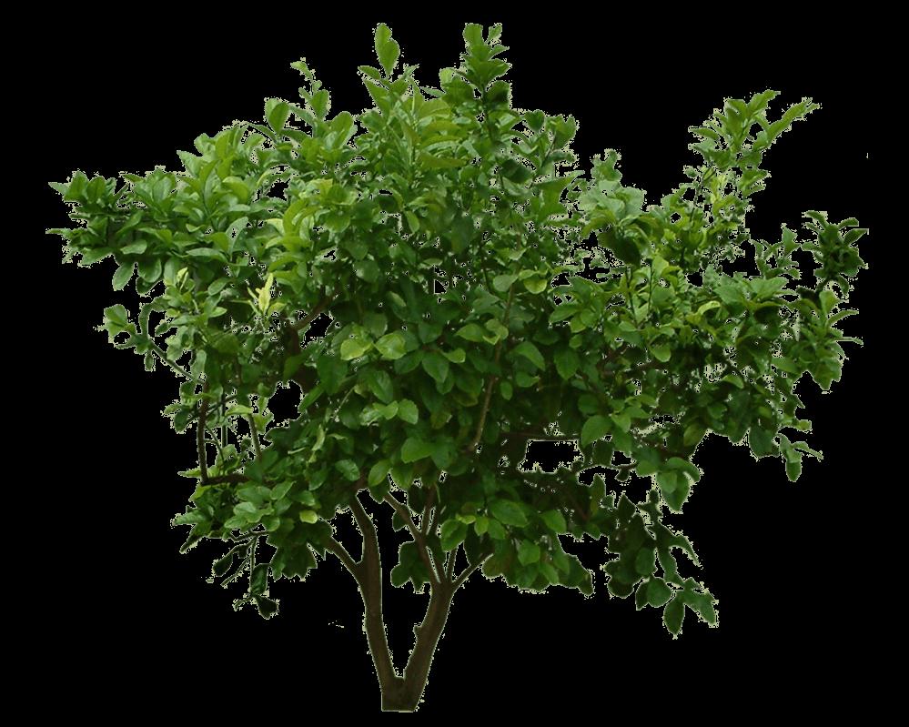 Little Bush transparent PNG.