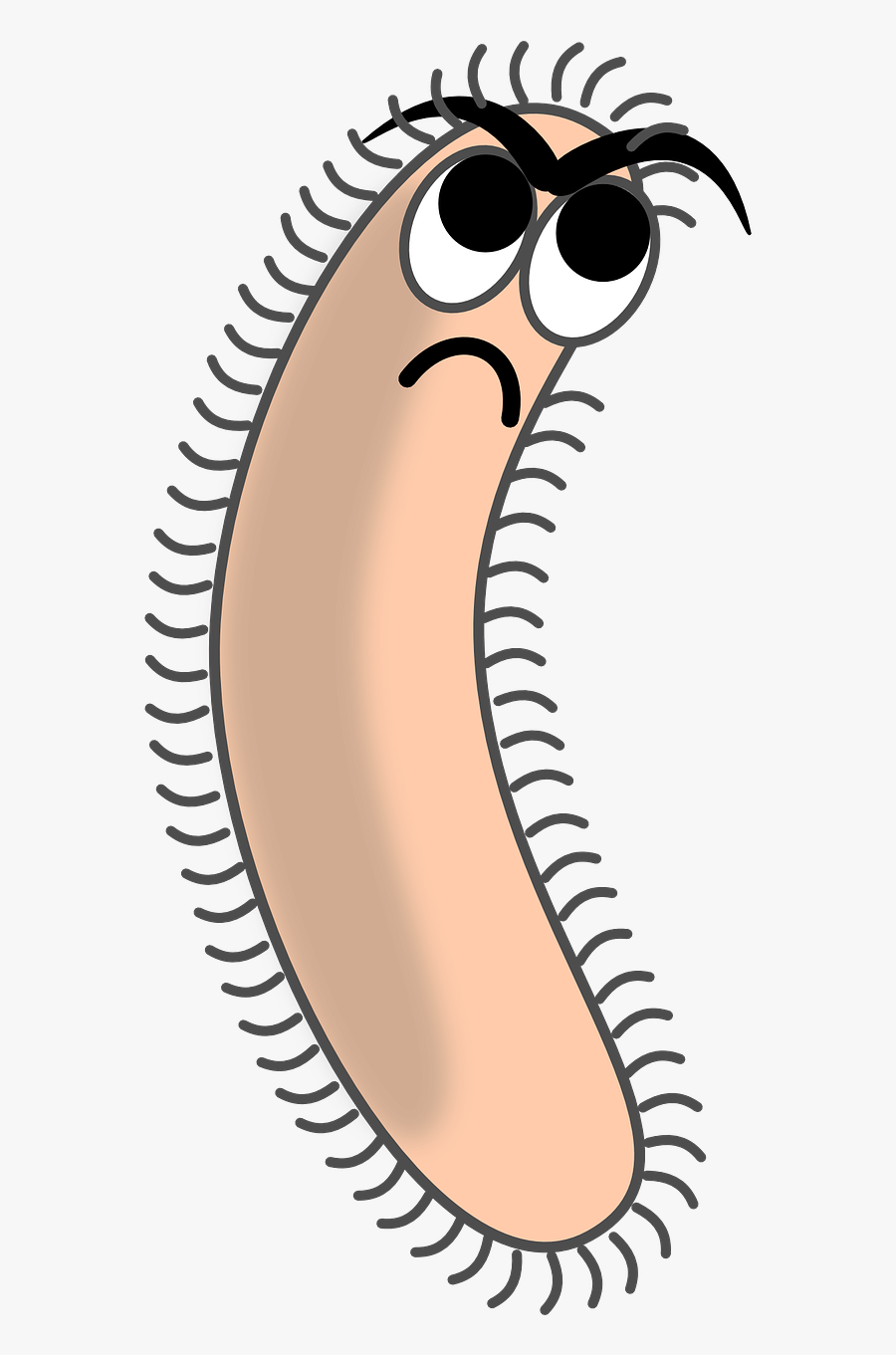 Bacteria Germ Pathogene Cell Png Image.