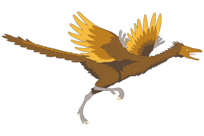 Archaeopteryx Facts, Pictures & Information For Kids, Students.