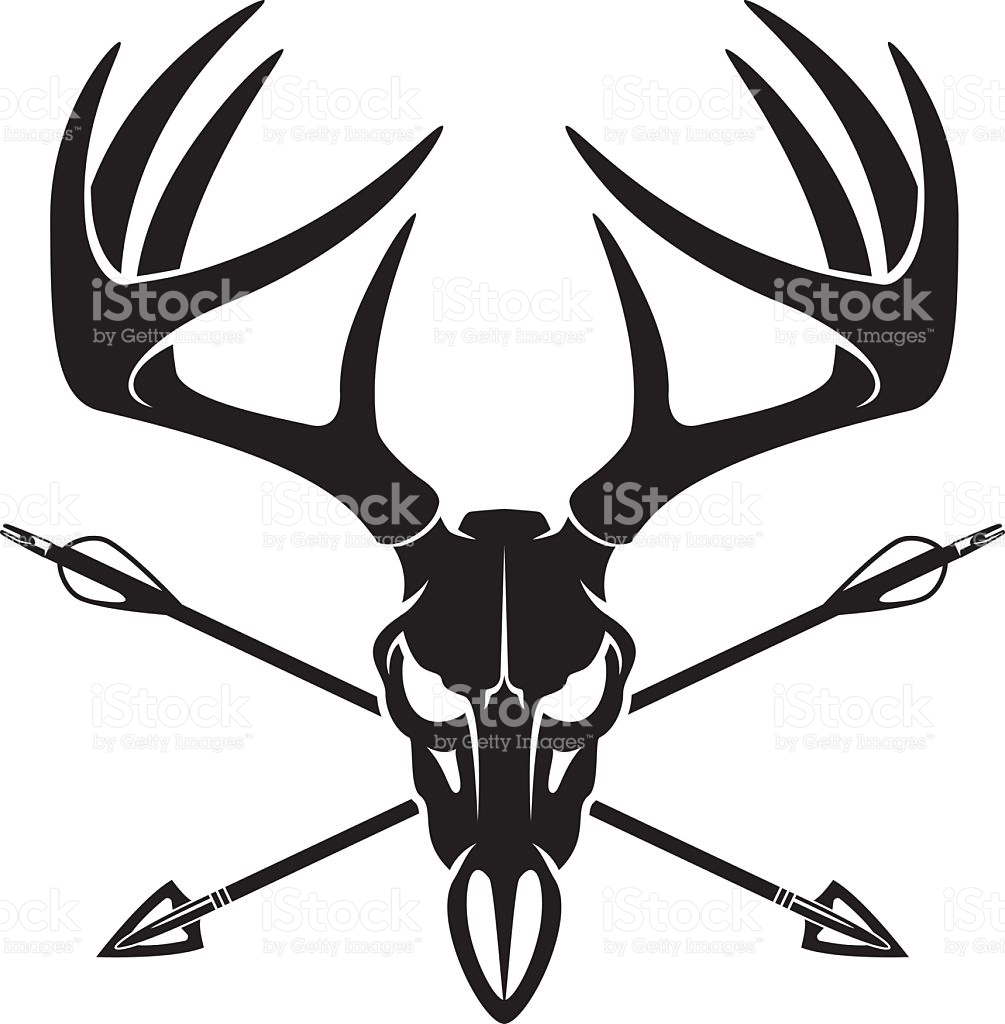 Whitetail Deer Buck Skull With Crossing Hunting Arrows stock.