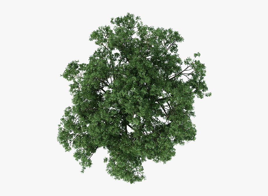 Plan Tree Architecture Texture Mapping Free Frame Clipart.