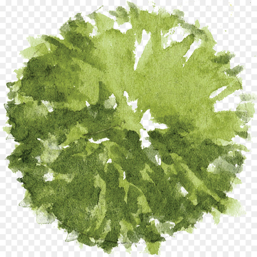 Green Leaf Watercolor png download.