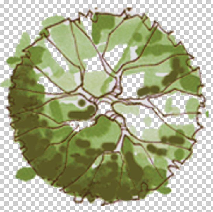 Tree Site Plan Landscape Architecture PNG, Clipart, Architectural.