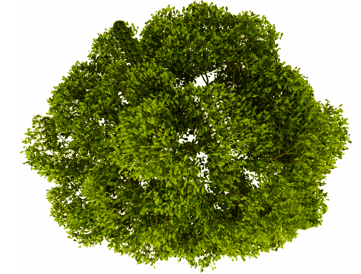 Tree PNG Top View Transparent Tree Top View.PNG Images..