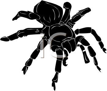 Picture of a Black Tarantula In a Vector Clip Art Illustration.