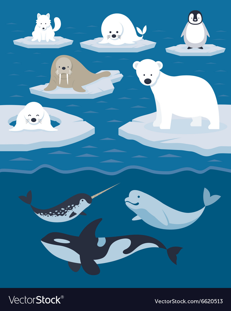 Arctic Animals Character and Background.