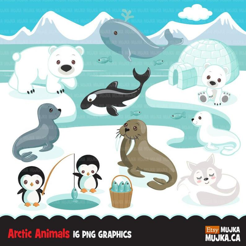 Arctic animals clipart. Cute winter animals, igloo, whale, walrus, penguin,  polar bear, seal pup, orca, fox Baby shower, birthday graphics.