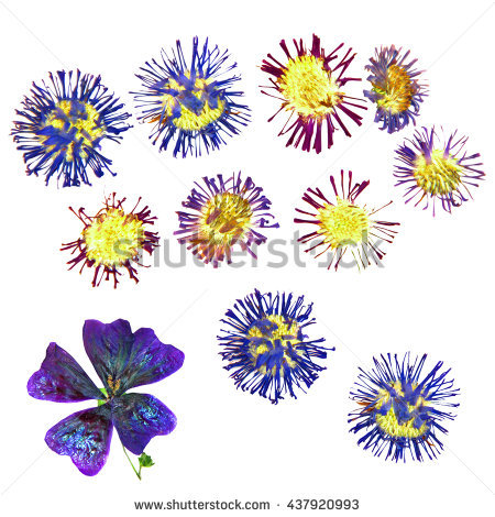 Arctic Bloom Flowers Stock Photos, Royalty.