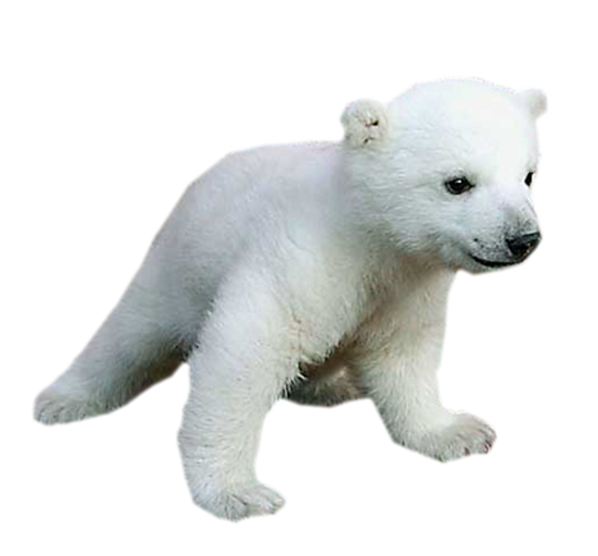 Polar bear Baby Animals for Kids.