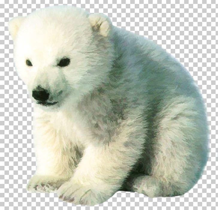 Baby Polar Bear Arctic Kodiak Bear PNG, Clipart, Animals.