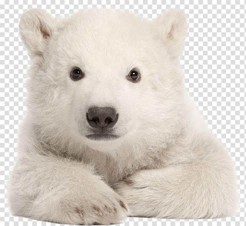 Polar bear My First Baby Animals Arctic American black bear.