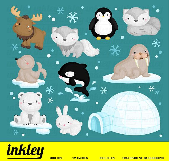 Arctic Animal Clipart.