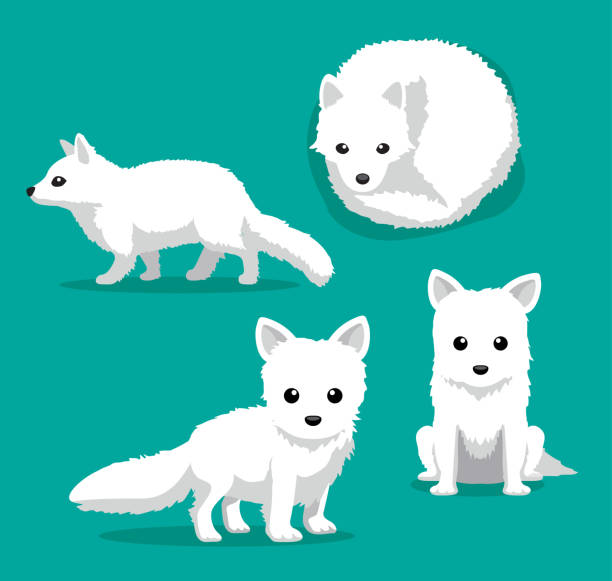 Best Arctic Fox Illustrations, Royalty.