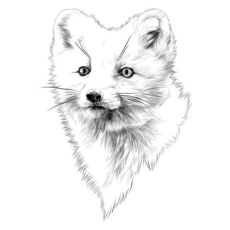 488 Arctic Fox Stock Vector Illustration And Royalty Free Arctic Fox.