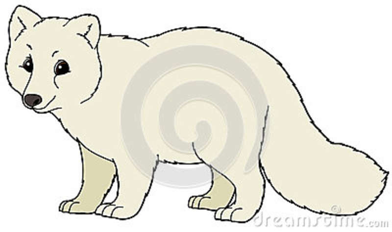 Arctic Fox Cartoon.