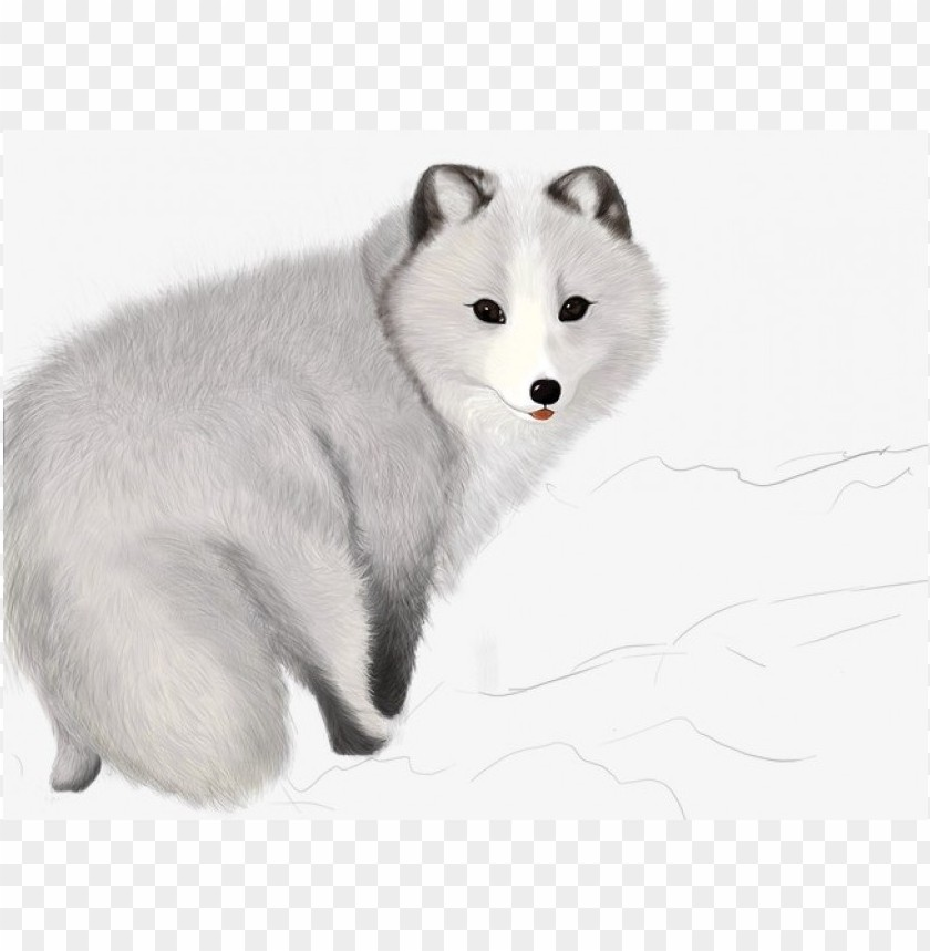 Download a fox, arctic fox, cut clipart png photo.