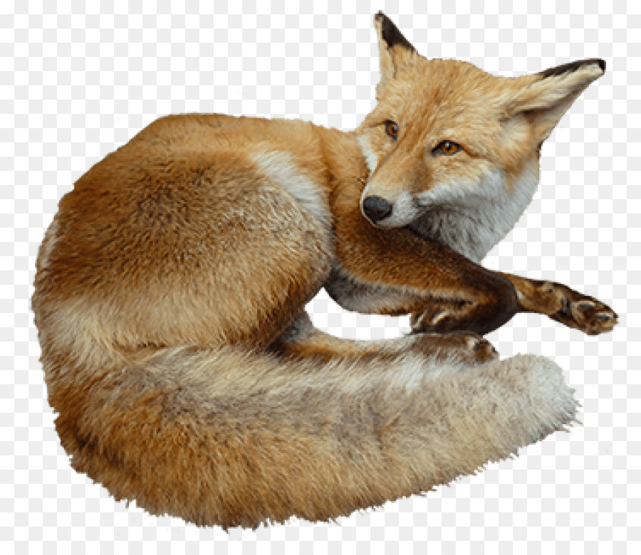 Red fox Clip art Kit fox Bird Image.