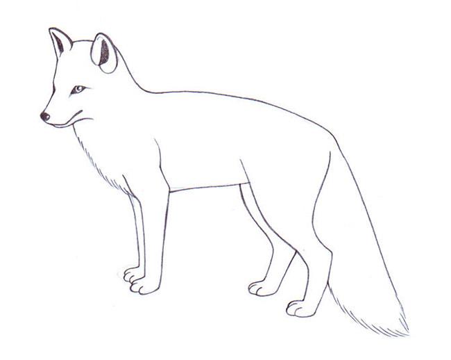 Silhouette Of Arctic Fox.