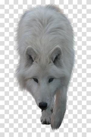 Howling white fox illustration, Arctic fox Alaskan tundra.