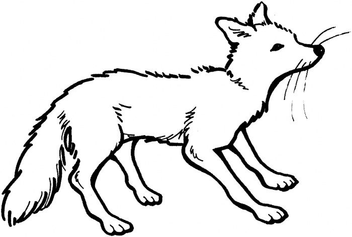 Image result for arctic fox clipart.