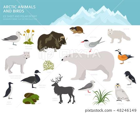 Ice sheet and polar desert biome. ecosystem.