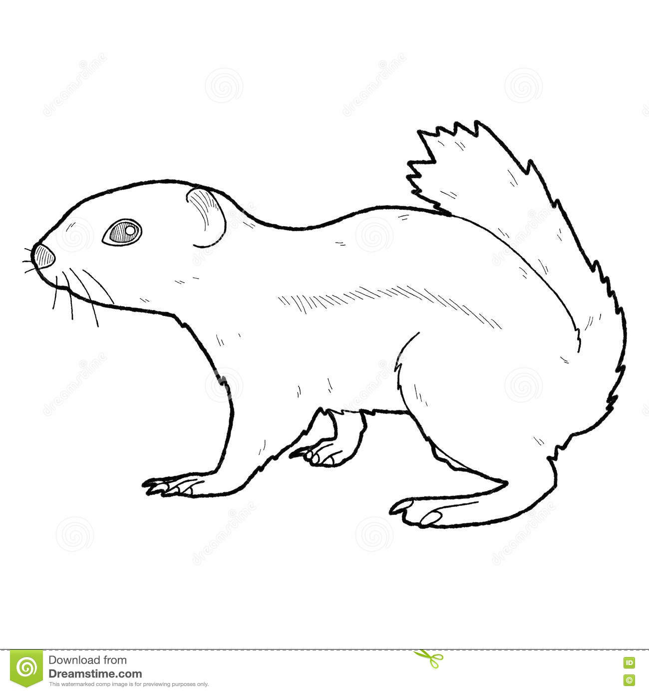 Ground Squirrel Cartoon Animal Stock Vector.