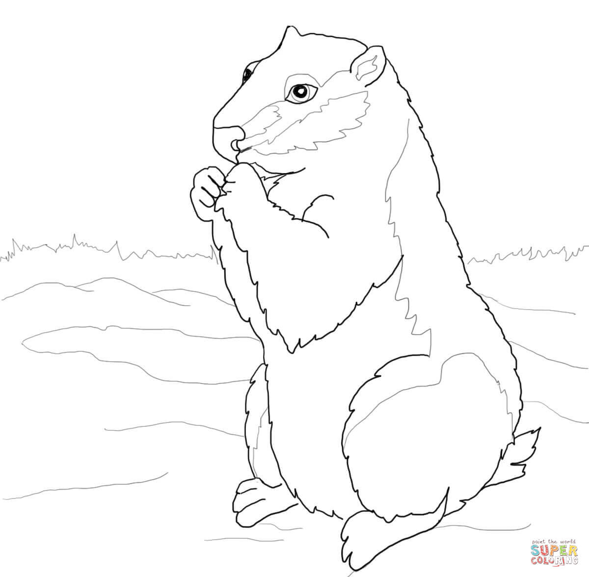 Ground squirrel coloring pages.