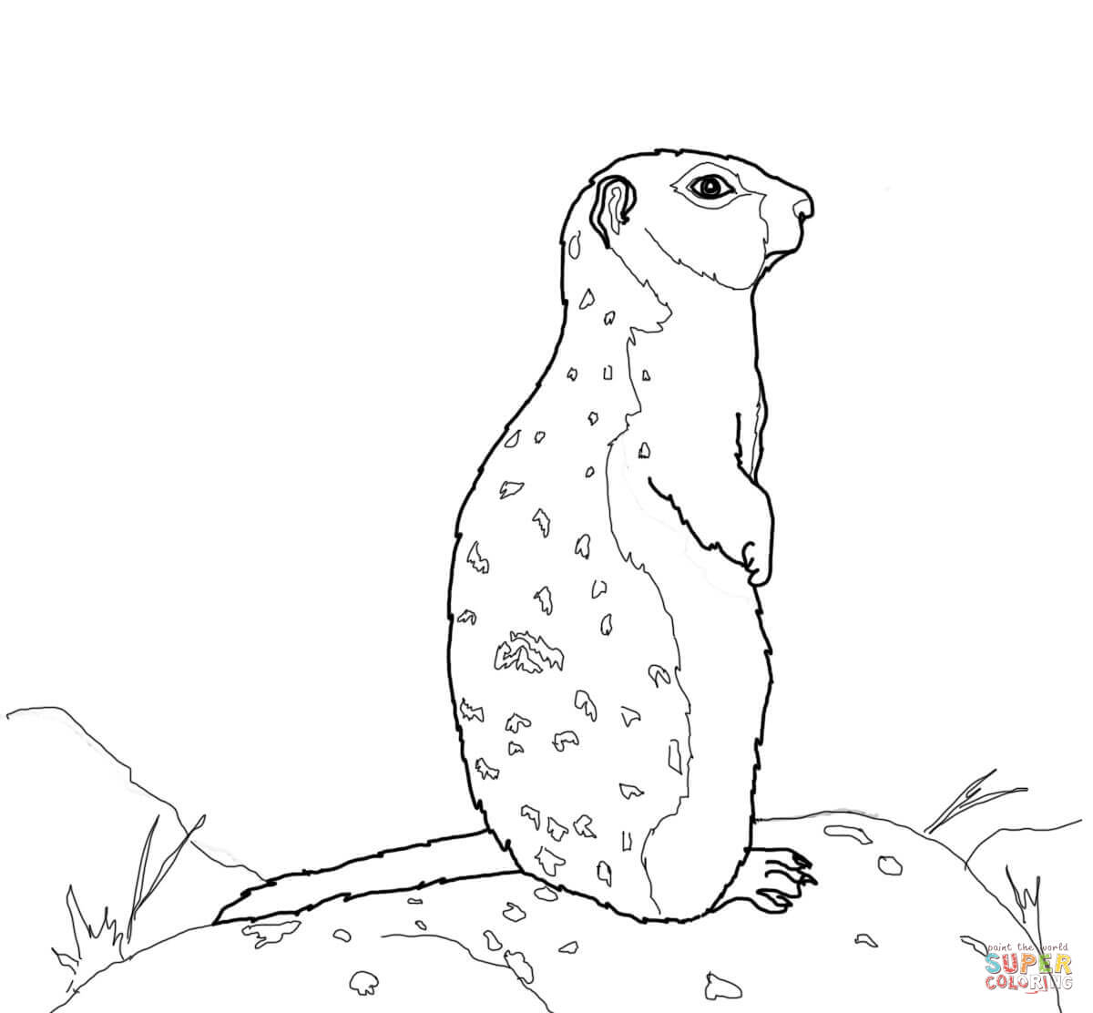 Arctic Ground Squirrel Stands on a Rock coloring page.